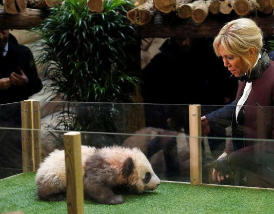 Visite de Brigitte Macron à l'ourson panda du zoo de Beauval, le 4 décembre 2017.
