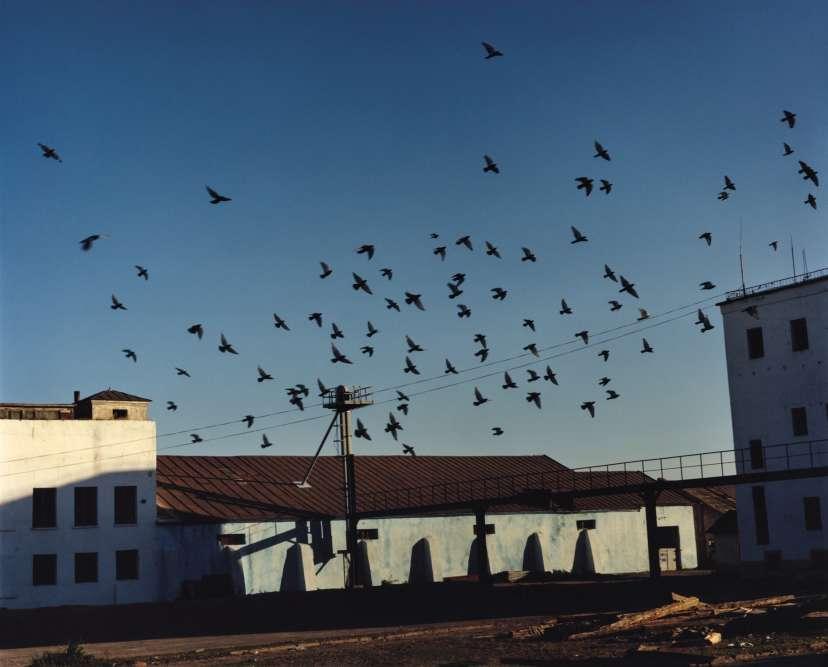 « Birds», Mongolie, 2017.