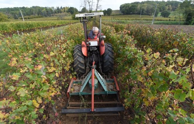 Un domaine viticole bio, le 23 octobre, à Saint-Magne-de-Castillon, en Gironde.