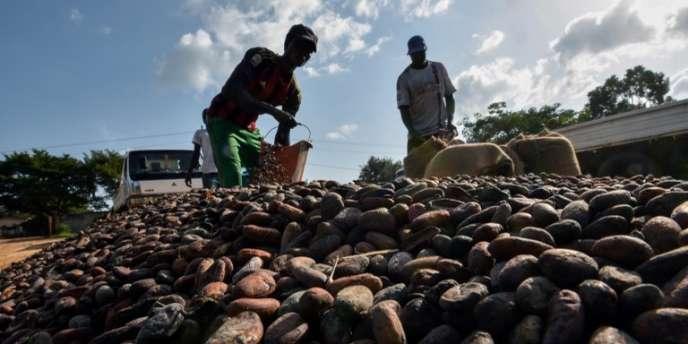A Guiglo, dans l'ouest de la Côte d'Ivoire pendant la récolte de cacao, en octobre 2016.