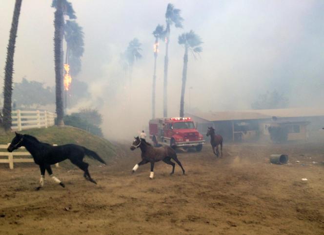 Des chevaux paniqués s'enfuient pour échapper au feu dans un centre d'entraînement, près de san Diego, le 7 décembre.