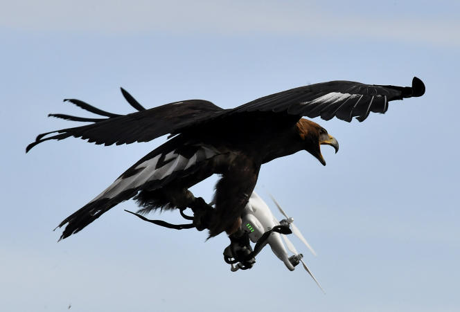 Un aigle intercepte un drone, à la base de Mont-de-Marsan, le 10 février 2017.