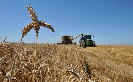 Un champ de blé, près de Caen (Calvados). Le revenu moyen des céréaliers a connu un plongeon historique en 2016, selon les chiffres du ministère de l'agriculture.