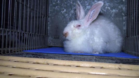 Selon L214, la Fédération des vétérinaires d'Europe, l'élevage des lapins en cage entraîne d'importantes restrictions comportementales. En découle du stress, des stéréotypies et une prévalence de maladies plus élevée.