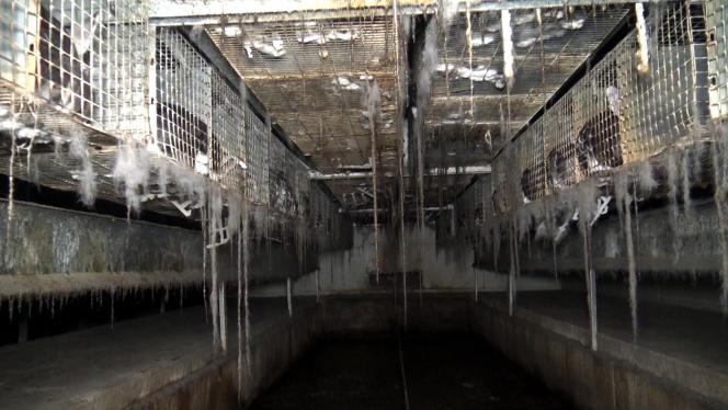 Selon L214, l'élevage de l'INRA présente des installations particulièrement vétustes ainsi qu'un important défaut d'entretien des locaux.