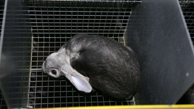 Certains animaux sont atteints du « syndrome vestibulaire », qui les force à rester la tête tordue vers le sol.