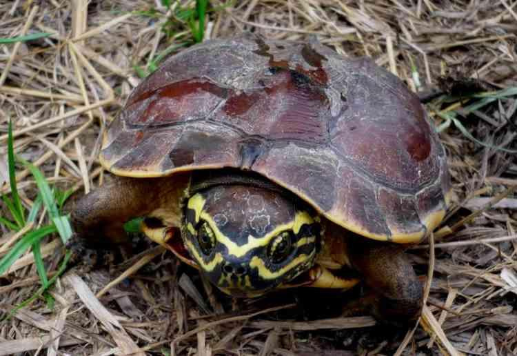 Chaque année, les scientifiques du Fonds mondial pour la nature (WWF) annoncent la découverte de nouvelles espèces après un long processus d'évaluation par leurs pairs. En 2015, 163 nouvelles espèces avaient été découvertes.Souvent, ils craignent que les espèces ne disparaissent avant même d'avoir été répertoriées tant le développement de la région est rapide, avec la construction de routes et de barrages, mais aussi le trafic d'animaux sauvages.