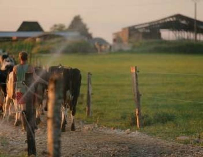 Frédéric, éleveur laitier, retrouve le chemin des pâturages.