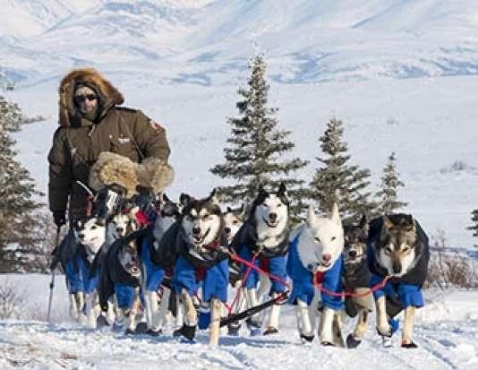 La plus grande course de chiens de traîneau du monde, l'Iditarod, avec neuf jours de course intense.