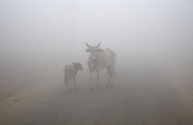 Une vache et son veau, près de New Delhi, en Inde, en 2017.