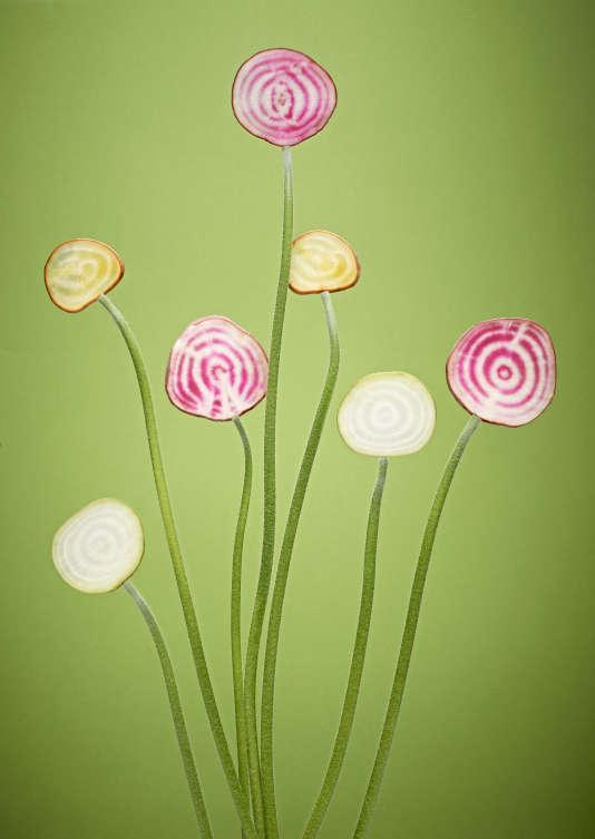 La betterave possède un bouquet de variétés à chair blanche, jaune ou rayée (de blanc et de rose pour la jolie chioggia italienne, très décorative).