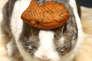 Le lapin Oolang a été photographié par son propriétaire Hironori Akutagawa avec toutes sortes d'objets sur la tête entre 1999 et 2003. La série a d'abord été publiée sur un blog avant d'être éditée dans la collection «In Almost Every Picture» (KesselsKramer publishing, 2009).