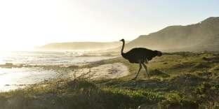 Dans la réserve naturelle du Cap de Bonne-Espérance.