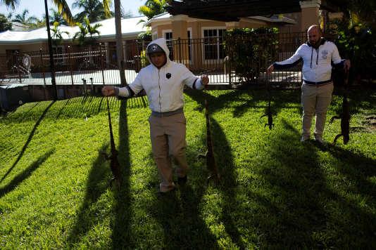 De nombreux iguanes ont été congelés par la chute inhabituelle des températrues en Floride, jeudi 4 janvier.