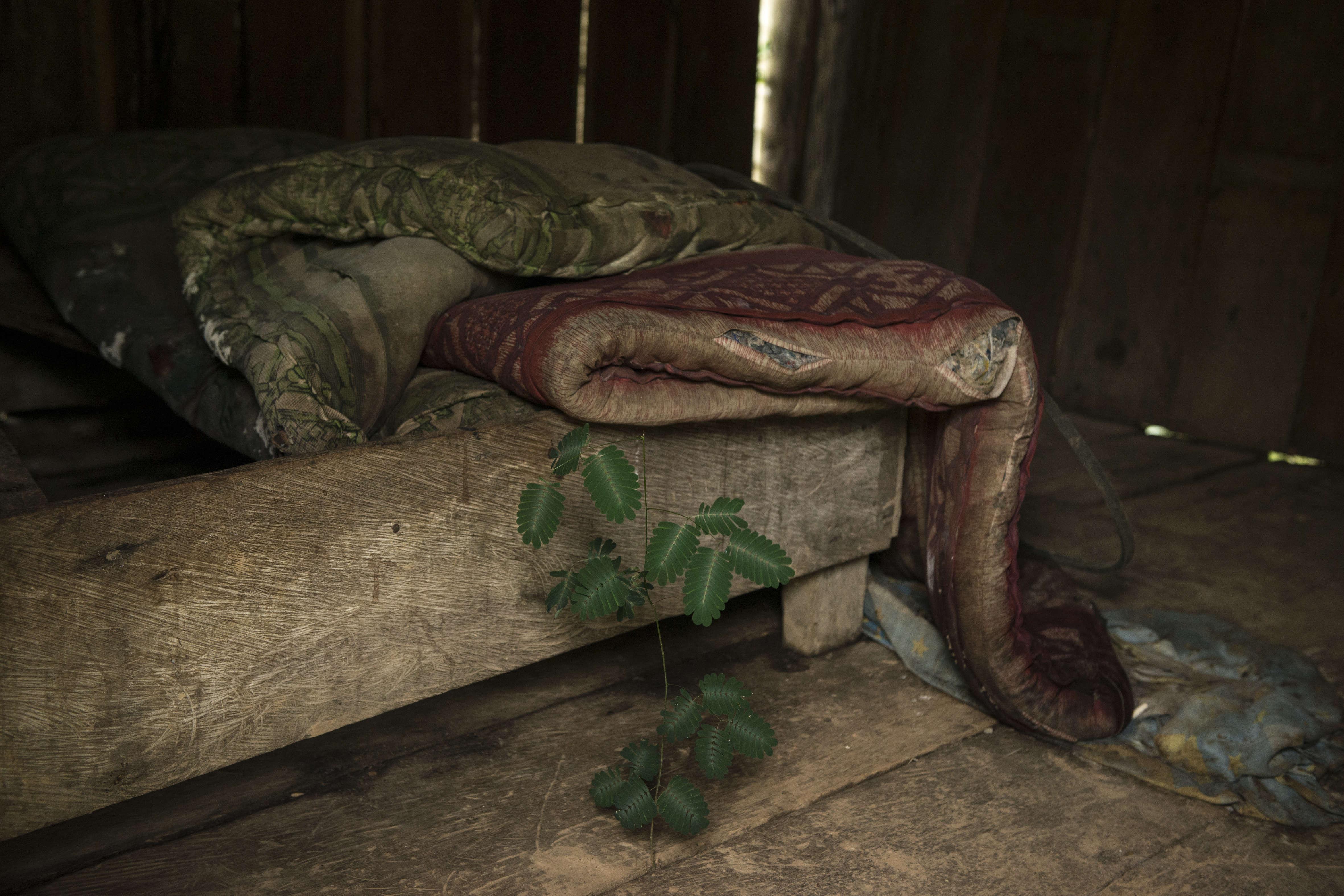 """Dans la maison abandonnée d'une ferme à Peñas Roja, une plante a percé au travers des lames de bois du sol. Le village est peuplé d'une petite centaine de personnes. Sa population baisse depuis que la production de coca s'est effondré en raison de l'invasion d'un parasite, le """"gringo""""."""