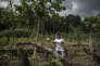 Cet habitant de Peña Roja (Colombie) peut à peine subvenir aux besoins de sa famille avec la culture de coca.