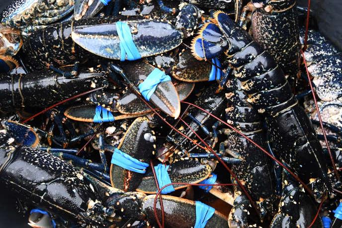 Les défenseurs des droits des animaux et des scientifiques qui ont travaillé depuis sur la question estiment que les homards et les autres crustacés possèdent des systèmes nerveux complexes et qu'ils ressentent vraisemblablement de la douleur lorsqu'ils sont ébouillantés.
