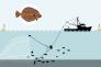 Interdite depuis 1998, la pêche électrique profite pourtant de larges dérogations accordées par l'Union européenne en mer du Nord.