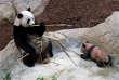 En décembre, Brigitte Macron avait rendu visite au bébé panda, à l'occasion d'une grande cérémonie de baptême en présence de dignitaires chinois.