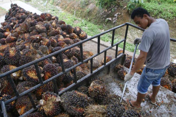 Récolte d'huile de palme en Indonésie, en avril 2016.