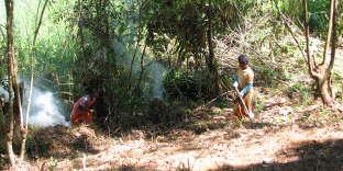 La préparation d'un campement Semaq Beri avant la saison de cueillette des durians.