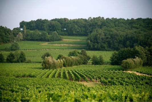 Les bois et la végétation maintenus dans les vignobles de Peybonhomme entretiennent la biodiversité.