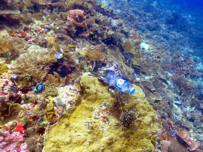 Quelque 11 milliards de débris plastiques jonchent les récifs coralliens dans la zone Asie-Pacifique. Leur nombre pourrait croître de 40 % d'ici à 2025.