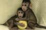 Zhong Zhong et Hua Hua (à moins que ce ne soit le contraire), les deux premiers primates clonés selon la technique employée pour la brebis Dolly.