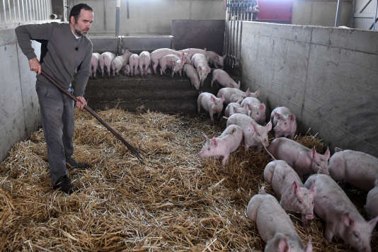 Dans un élevage à Plélo (Côtes-d'Armor), en décembre 2017.