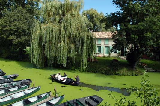 Le Marais poitevin, à Arçais, aussi apaisant que verdoyant.
