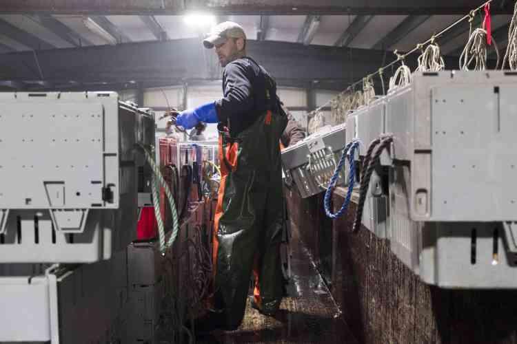 Le tri des homards se fait à la main, l'animal étant fragile. Le travail se déroule dans l'humidité et le froid.