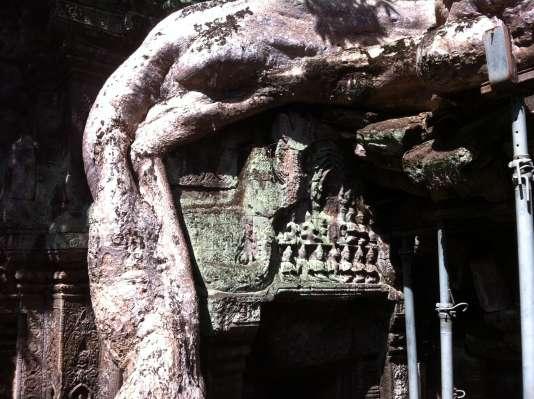 Les monstrueuses racines des fromagers prennent possession des temples jusqu'à les démembrer. Si la plupart des édifices ont été dégagés, le Tapromh, ci-contre, est gardé en l'état, pour témoigner de l'opération de destruction de la jungle.