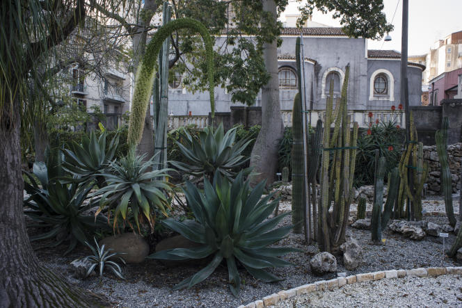 Le jardin Botanique.