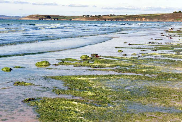 A Plonevez-Porzay, en marge d'une manifestation en septembre 2010 à l'appel d'associations de défense de l'environnement pour protester contre les marées d'algues vertes qui prolifèrent chaque été sur les côtes bretonnes.