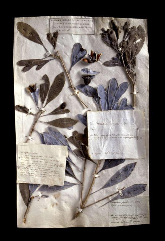 Le Muséum national d'histoire naturelle de Paris numérise la collection de l'Herbier national, le plus grand et le plus ancien au monde.