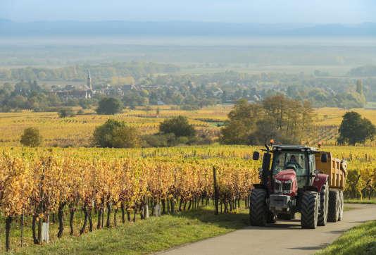 Un viticulteur sur son tracteur près du village d'Heiligenstein, en Alsace, le 18 octobre 2017.