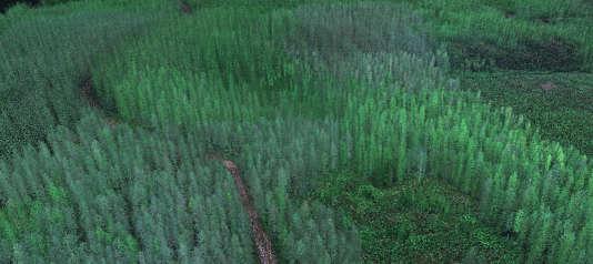 Image lidar de la forêt finlandaise.
