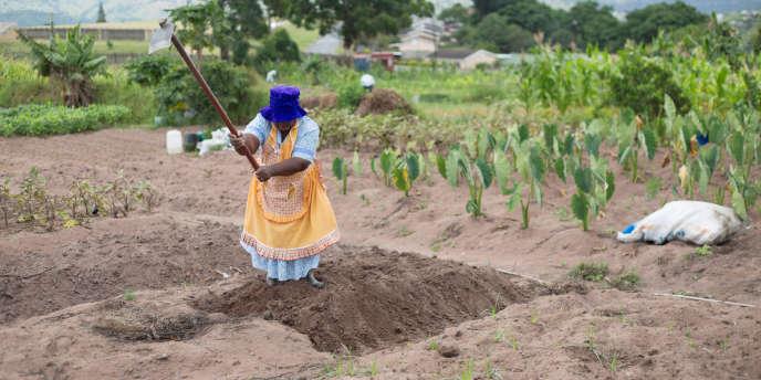 Une femme travaille dans un potager communal à KwaNdengezi, en Afrique du Sud en janvier 2018.