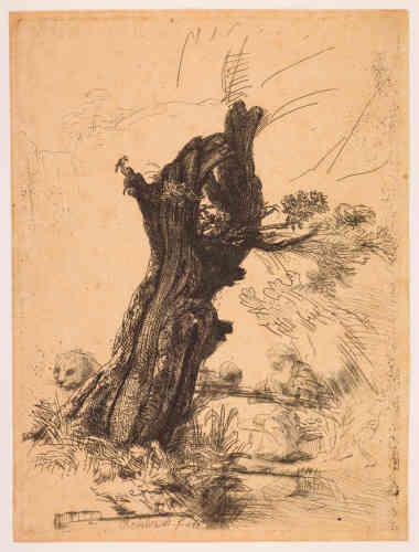 """«Le regard est d'abord attiré par un tronc de saule noueux, puis on découvre à l'arrière-plan les attributs traditionnels de saint Jérôme: le lion à gauche, le crâne, le chapeau de cardinal, le crucifix, puis le saint à peine ébauché. Rembrandt a peut-être réutilisé une étude d'arbre faite sur nature, et ajouté ensuite la figure. L'oiseau sur la branche en haut à droite est à peine visible. Quoique protestant, Rembrandt a gravé sept fois saint Jérôme. Il n'occupe finalement ici qu'une place secondaire. Saint Jérôme, patron des humanistes, a écrit la """"Vulgate"""", traduction latine de la Bible.»"""