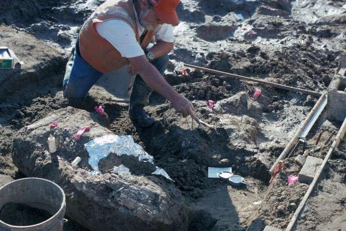 Un paléontologue du Muséum d'histoire naturelle de San Diego pointe un rocher près d'un fragment de défense de mastodonte, lors de la fouille, dans les années 1990.