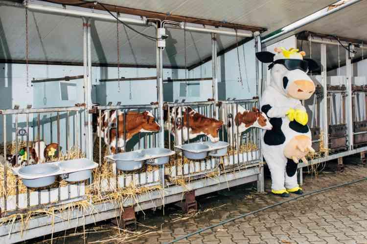 La ferme d'un producteur de lait bio, près de Münster, lors de la Journée mondiale des produits laitiers, en 2017.