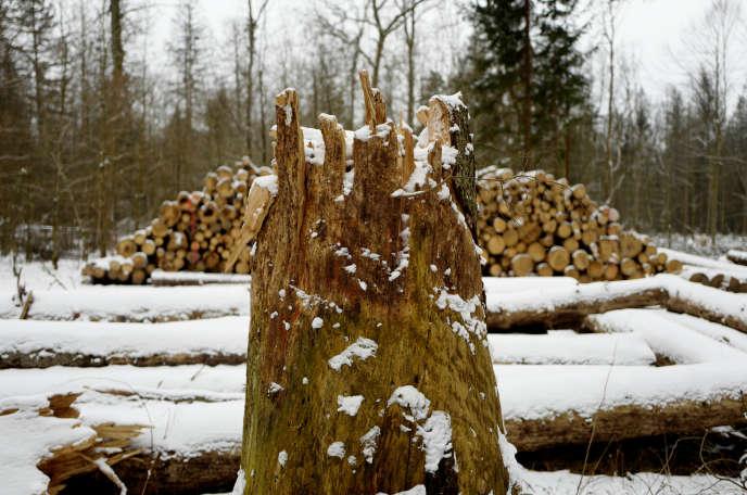 Dans la forêt de Bialowieza (Pologne), le 15 février.