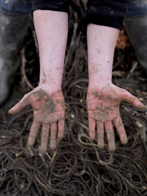Les mains de Sandra Vallon après une récolte.