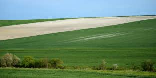Des champs de maïs et de blé, dans le centre de la France, en mai 2017.
