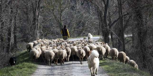 Les éleveurs de Fanjeaux craignent de perdre leur indemnité compensatoire de handicaps naturels à la défaveur d'un arbitrage ministériel.