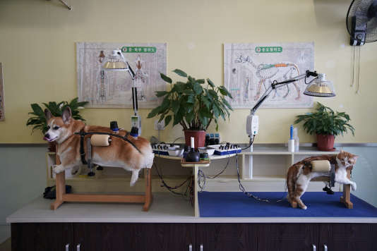Dans un centrede médecine traditionnelle chinoise destiné aux animaux,à Shanghaï (Chine),en août 2017.