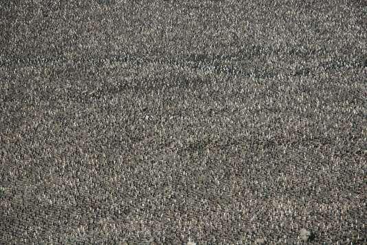 Vue du ciel de l'archipel de Crozet, au sud de l'océan Indien, où des colonies de manchots royaux viennent se réfugier chaque année.