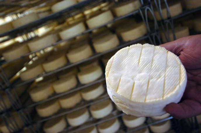 Un employé montre un camembert «au hâloir», le 1er juin 2007 dans la fromagerie de camembert AOC du domaine de Saint-Loup-de-Fribois, dans le Calvados.