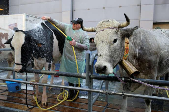 Des vaches laitières Prim'Holstein du Salon de l'agriculture 2018 à Paris, le 23 février 2018.