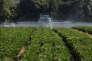 « Les agriculteurs des régions les plus productives ont obtenu des aides compensatoires plus généreuses que leurs collègues des zones plus ingrates» (Photo: épandage d'insecticide à Pont-Saint-Martin, en 2016).